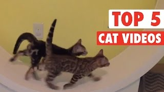Top 5 Cat Videos || Jan 22 2016
