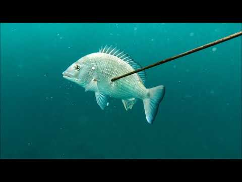 Spearfishing Bass Point