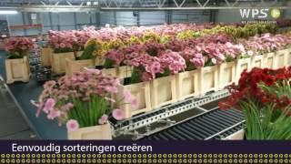 Eerste beelden van het gerbera verwerkingssysteem bij LG Flowers