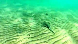 видео Ежи-рыбы