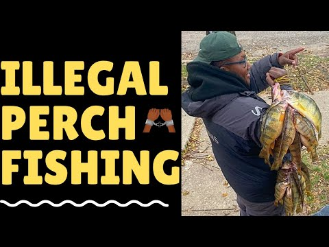 HOW TO CATCH MONSTER YELLOW JUMBO PERCH IN LAKE ERIE ( CENTRAL BASIN )