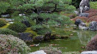 京都城南宮 室町の庭の池 水も温んできた春の訪れ 恋の季節かな~ 錦鯉...