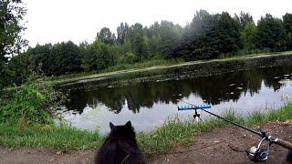 ЗАБРАЛСЯ В ДИКИЕ МЕСТА Рыбалка осенью на поплавок Ловля рыбы на реке в сентябре