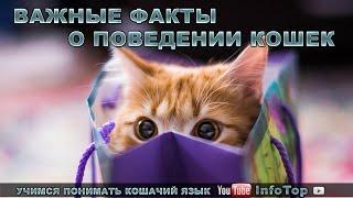 Важные факты о поведении кошек. Учимся понимать кошачий язык