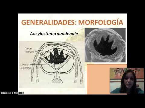 ADW: Ancylostoma duodenale: CLASSIFICATION