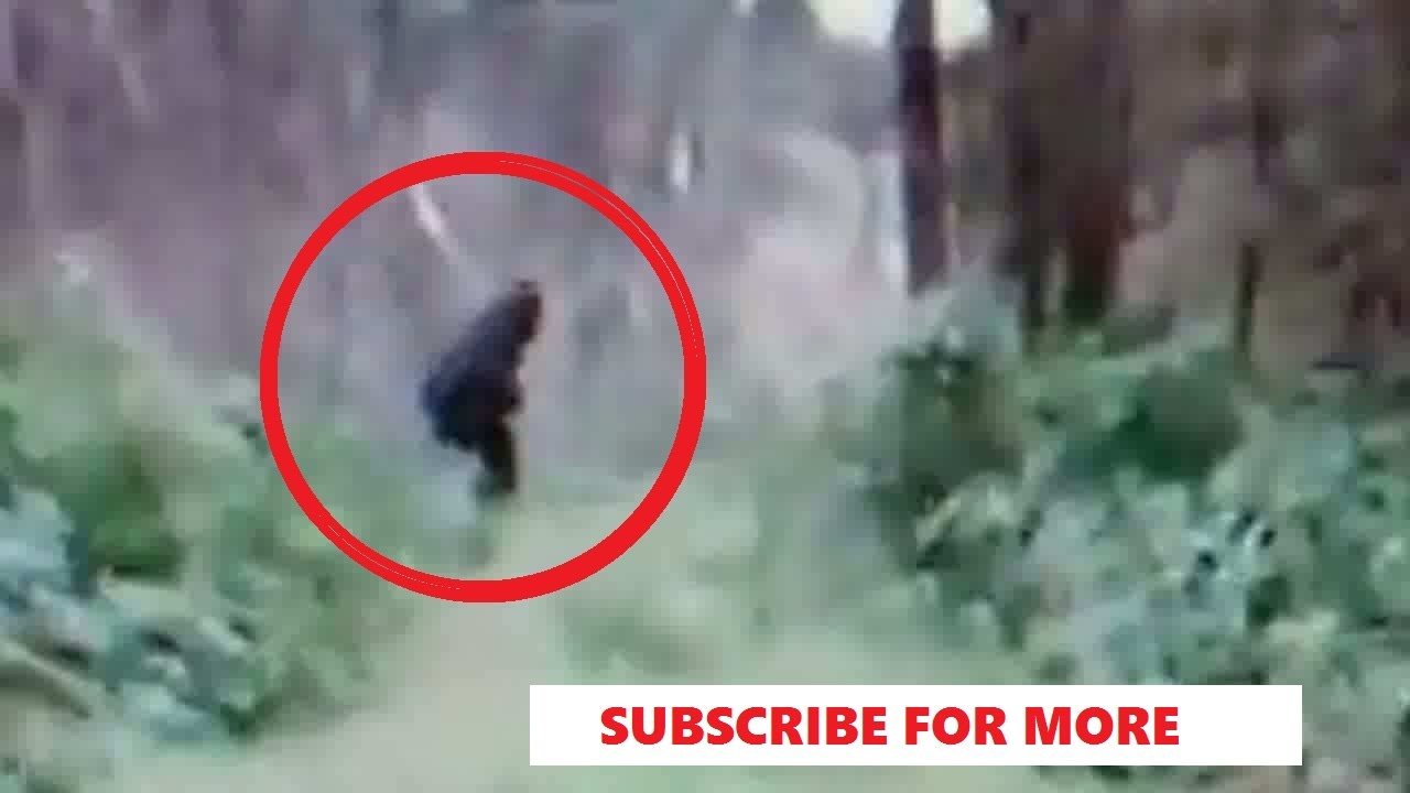 REAL AMAZING BIGFOOT PROOF!! CAUGHT ON VIDEO!! - Clearest