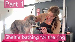 Part 1  Sheltie bathing for the ring