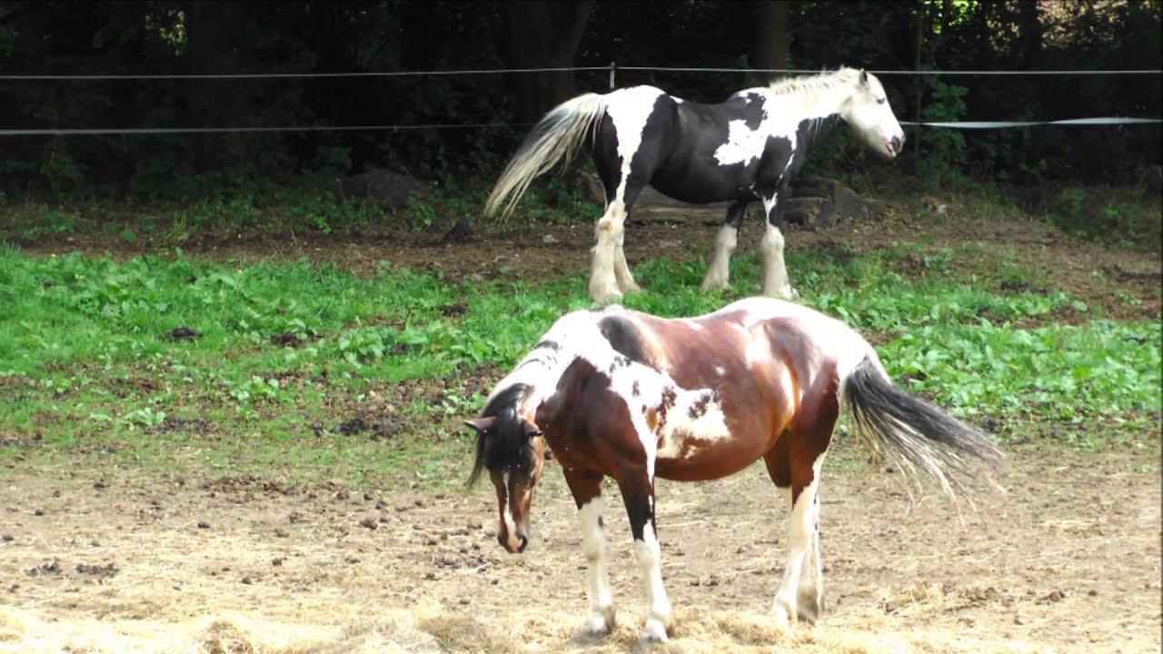 Da Steht Ein Pferd AufM Flur