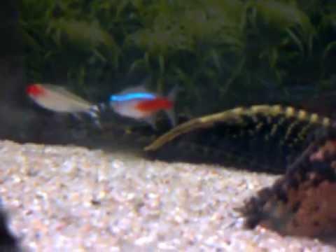 min kærestes, søsters, kærestes, mors akvarie