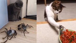 Baby Cats - Cute and Funny Cat Videos Compilation #4   Animals Love