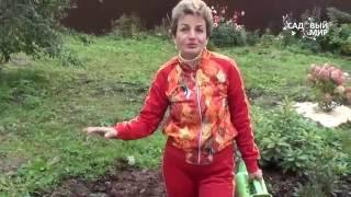 Как выращивать верески и рододендроны