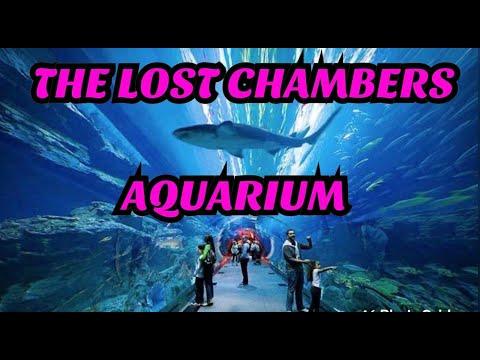 THE LOST CHAMBERS AQUARIUM l DUBAI ATLANTIS AQUARIUM l AMAZING & BEAUTIFUL AQUARIUM IN DUBAI