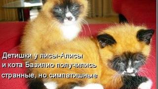 Смешные картинки про кошек и котят Выпуск №65  FUNNY CATS СМЕШНЫЕ КОШКИ