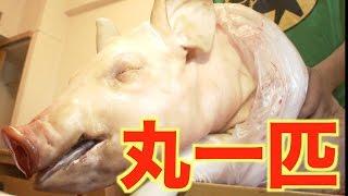 東海オンエアに大きいブタ肉を見せたよ☆