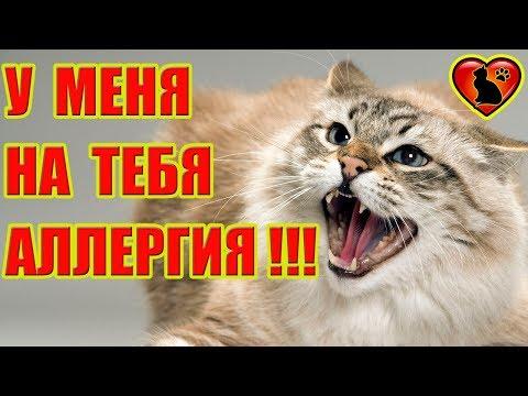 Вопрос: Бывает ли у кошек аллергия на кошек?
