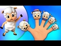 moutons doigts Famille   Comptines pour enfants   doigt Chanson   Sheep Finger Family Song