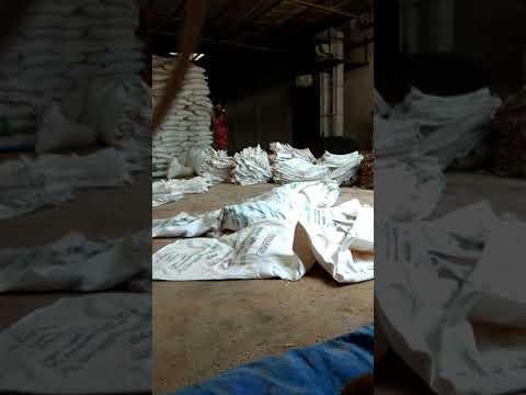 Bihari Lok Cutting Kar Raha Hai