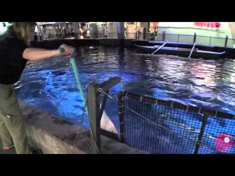 Shedd Aquarium Shark 'Feeding Tour' - BEHIND THE SCENES