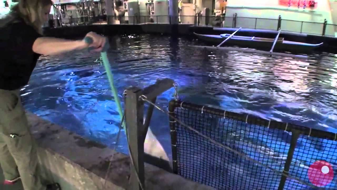 Live Sharks at the London Aquarium  Webcam Directory and