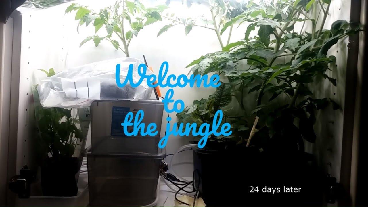 Hydroponics: Kitchen Grow-Light Setup (Nelson Garden) - YouTube