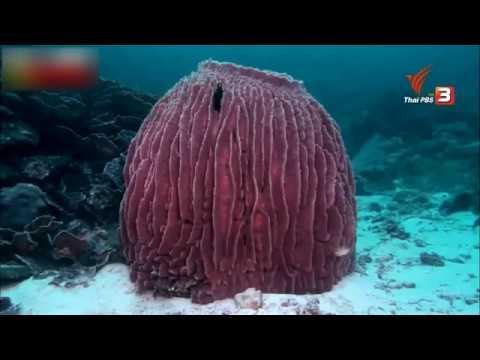 สำเนาของ สารคดีท่องโลกกว้าง เมืองใต้มหาสมุทร