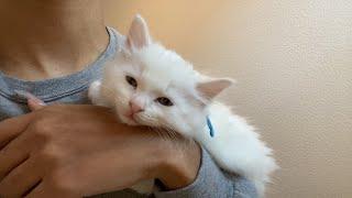 Meet our new kitten!!
