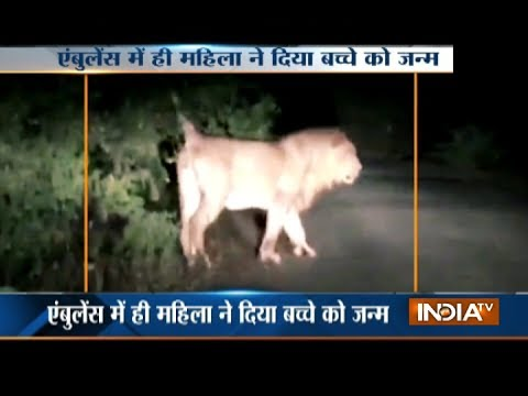 VIDEO: Gujarat woman delivers baby in ambulance surrounded by 12 lions