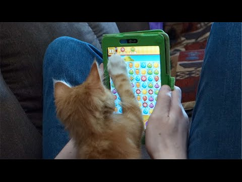 CUTE KITTENS Playing Tablet Games