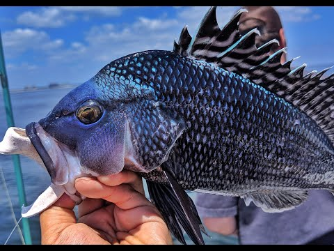 Party Boat Sea Bass Fishing - Jigging & Bait Rigs - NJ Fishing 2019