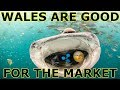 Whales are good for the market - Whales & Cryptocurrencies - Survival of the Fittest