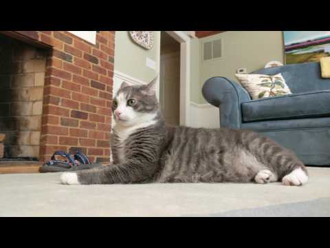 Kip listening to Music For Cats by David Teie