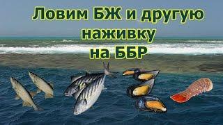 Русская Рыбалка 3.99 (Russian Fishing) Большой живец на ББР