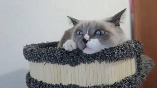 Когтеточка для кошек заказ с сайта Котомастер рф игровой комплекс для кошек котики котомастер
