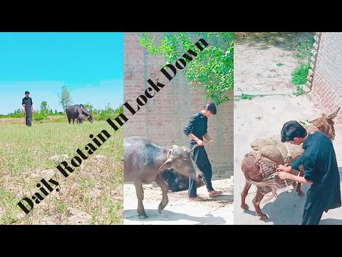 My Day Rotain In Village||My Day Rotain In Lock Down||Village Lock Down|| Day Rotain In Village