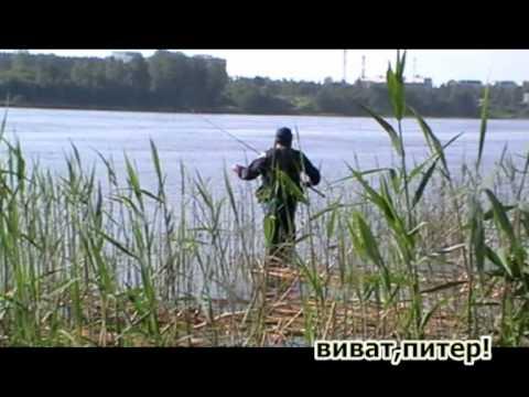 питер виват рыбак