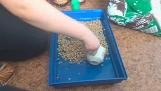 Как убирать у морской свинки в клетке