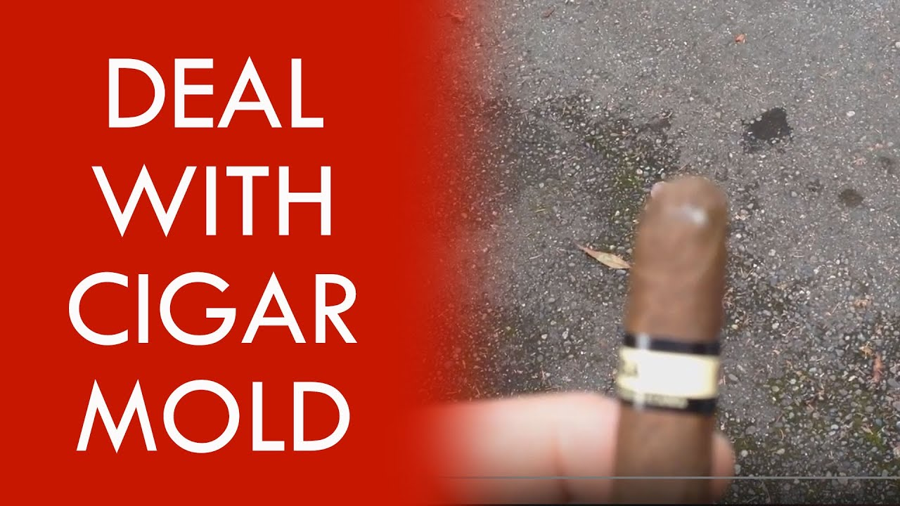 How to deal with cigar mold youtube - How to deal with mold ...