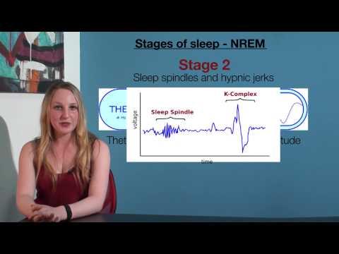 VCE Psychology - Stages of Sleep NREM