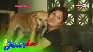 iJuander: Dog lover, mayroong 100 aso sa kanyang tahanan!