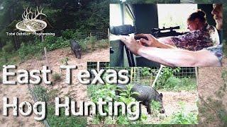 Wild Hog Hunting in East Texas, dropping big boars!