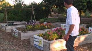 Gardening in the Desert Southwest  - Food Crops You Can Grow in St George Utah