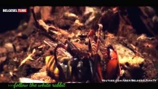 national geography-böcekler belgeseli 2