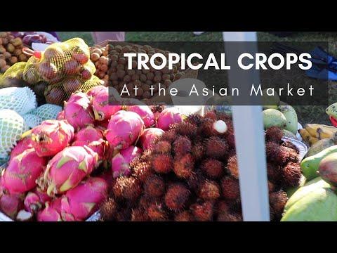 Fresh Coconuts, Cane Juice, Green Papaya Salad & More at the Mustang Market, Part 2