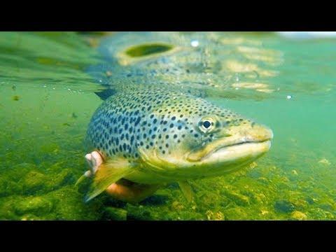 Рыбалка в Польше. Что ловится на Сане