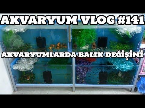 Akvaryum Vlog #141 (Akvaryumlarda Balık Değişimi)