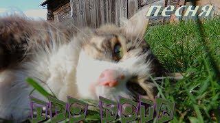 Бездомные котята впервые пробуют Вискас /Песня про кота