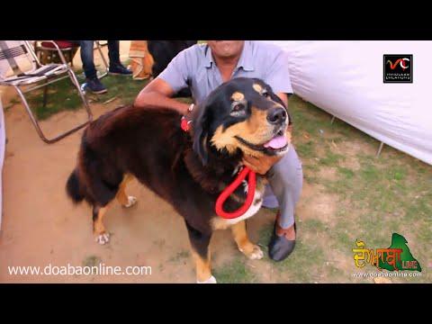 Dog Show - Jalandhar (22-03-2015) Highlights