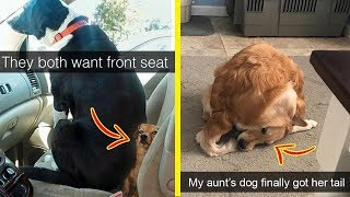 Hilarious Dog Snapchats That Will Make Your Day Better (NEW!)