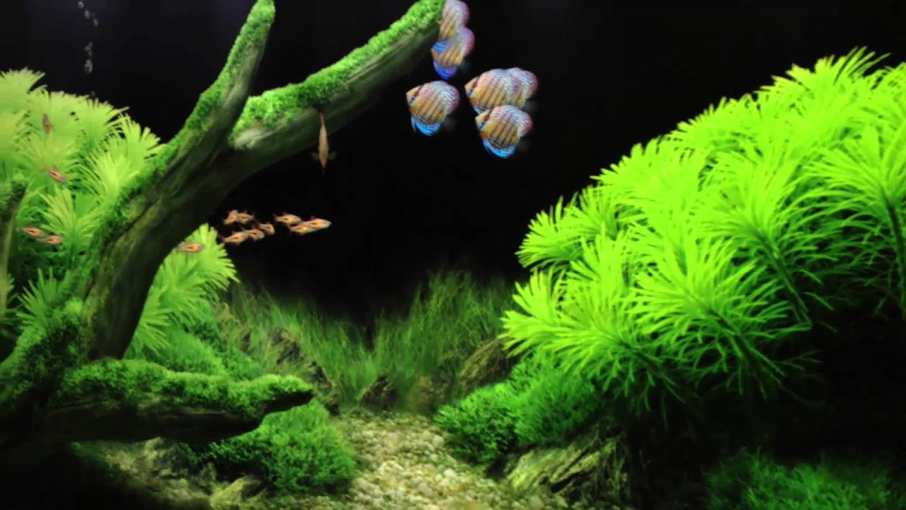 3d Fish Tank Wallpaper Digital Aquariums In Our Livingroom Youtube