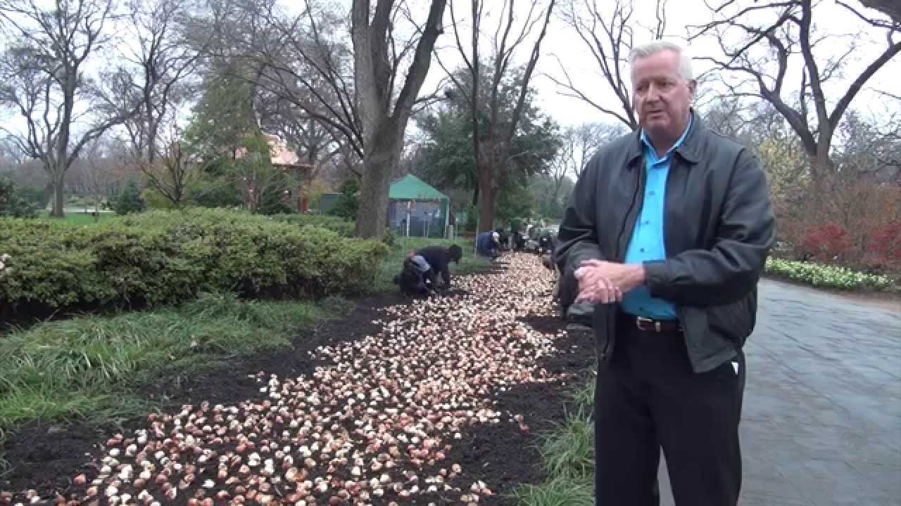 in the garden with dave forehand planting tulips for dallas, Natural flower